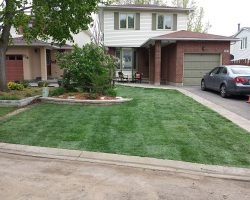 New Front Lawn